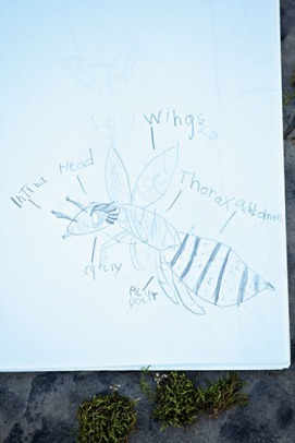 Bee Nature Journal
