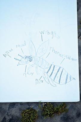 Bee Nature Journal